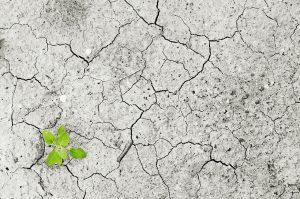 Buhr Gruppe Klimaschutz