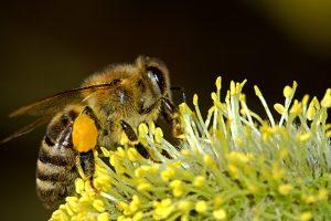 Bienen sterben Buhr Gruppe