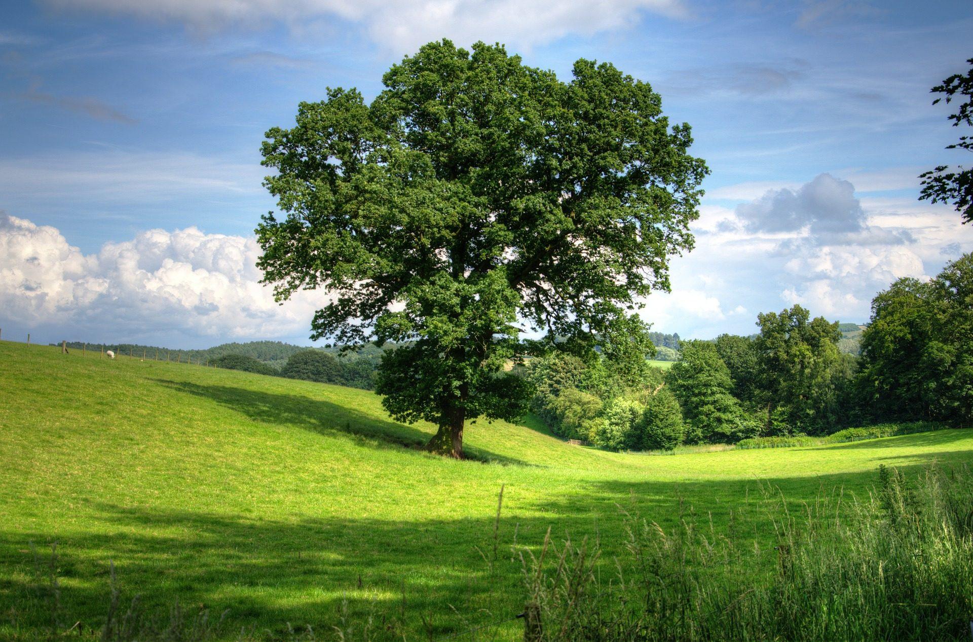 Buhr Gruppe Klimaschutz, Buhr Gruppe Umwelt, Buhr Gruppe Ökologischer Fußabdruck