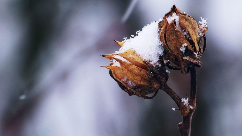 Buhr Gruppe Blog Garten winterfest